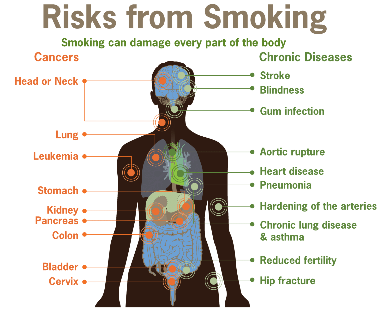 Effects Of Smoking On The Body - Southeast Radiation -8295