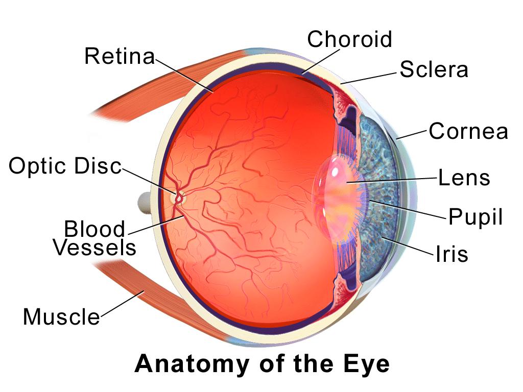 Intraocular eye melanoma southeast radiation oncology group what is intraocular eye melanoma ccuart Image collections